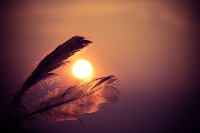 sunset-feathers