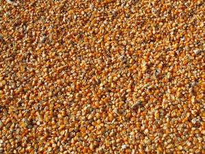 maize-264520_1920